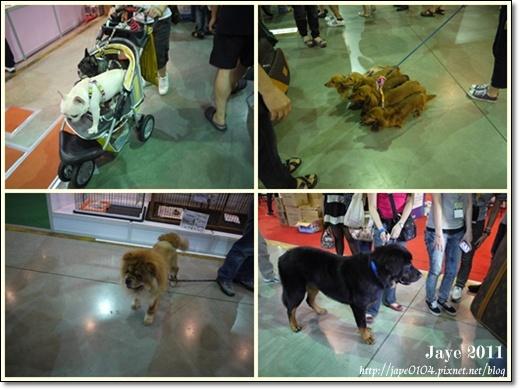 2011寵物展 (11).jpg