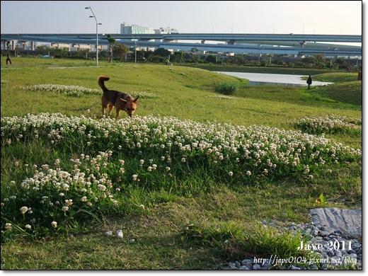 幸福水漾公園 (9).jpg