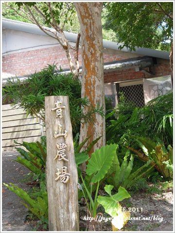 台東 (2).JPG