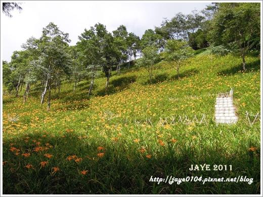 台東 (5).JPG