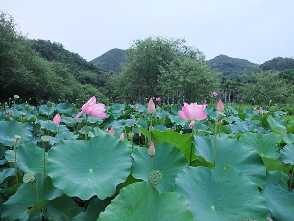 後湖水月 (90).jpg