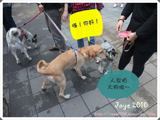 寵物嘉年華 (36).jpg