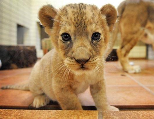 牠們期待的眼神也是那樣可愛!牠們是動物,但同樣也是孩子!是否有更多的理由去愛牠們呢?