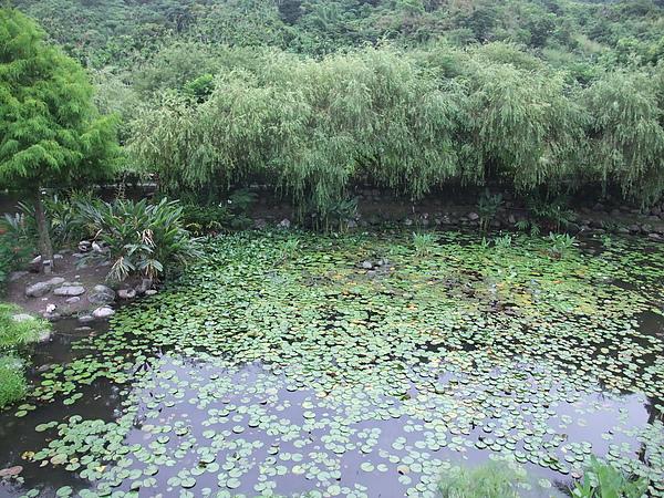 後湖水月 (23).jpg