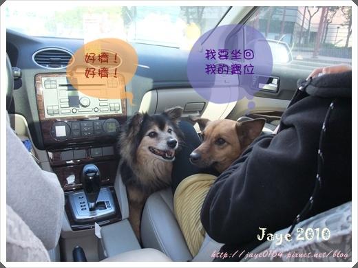 寵物嘉年華 (10).jpg