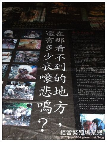 飢餓、囚禁、死亡:買寵物的背後 (37).jpg