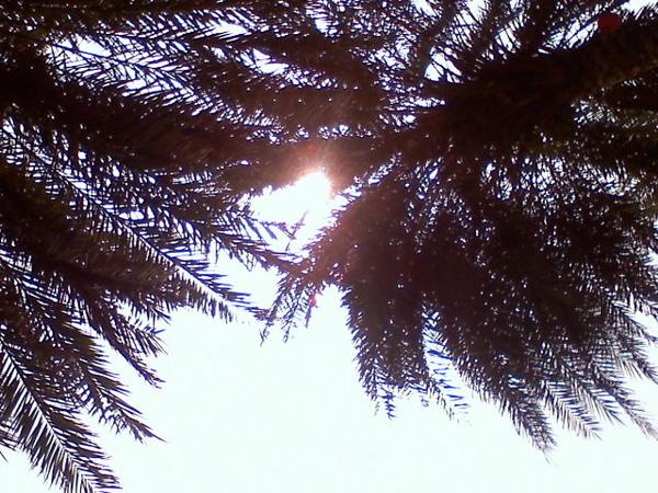 舒服的午後陽光.jpg