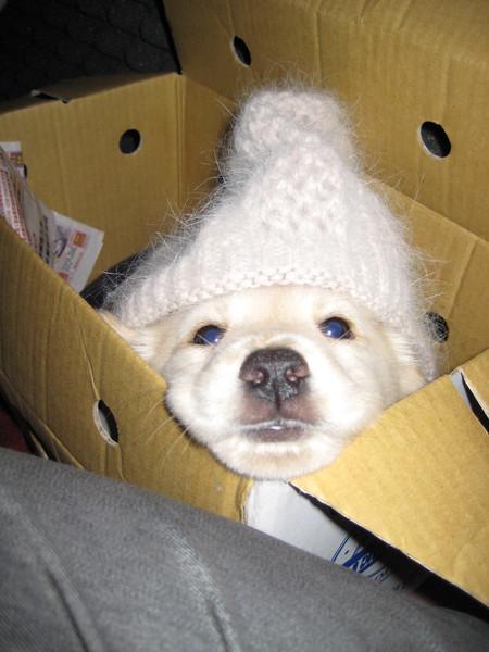把拔硬是把麻麻的帽帽給偶袋啦