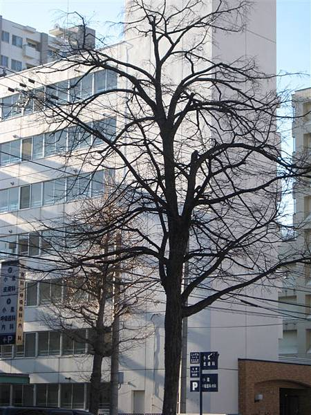 高緯度的樹冬天都好美