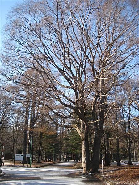 圓山公園入口處