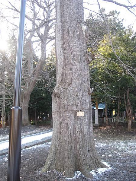 這些樹感覺都有數十年或百年了
