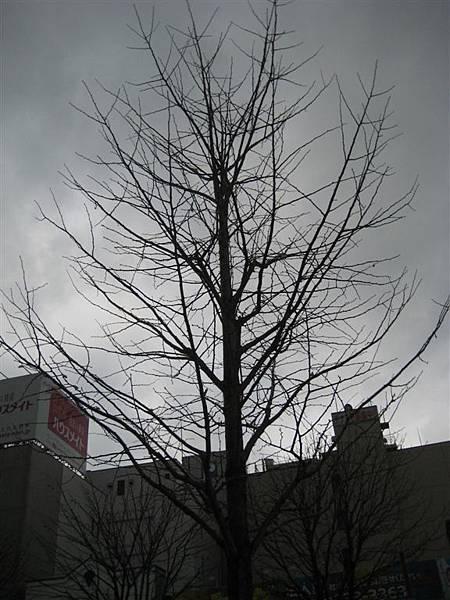 好整齊的一棵樹