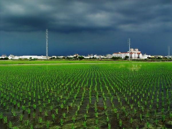 雷雨前的翠綠