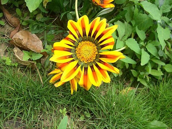 一朵很假的花
