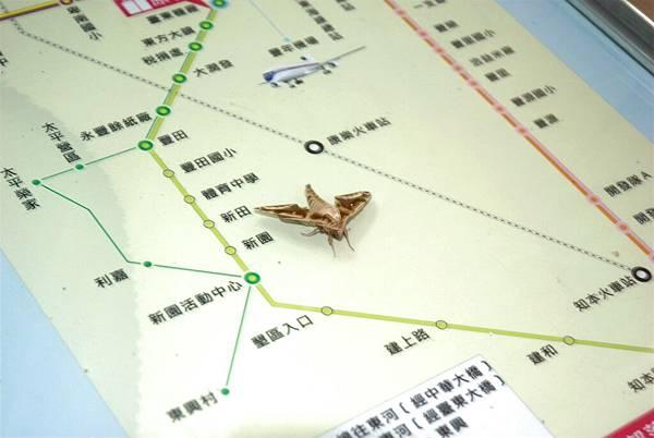 09.地圖與蛾.jpg