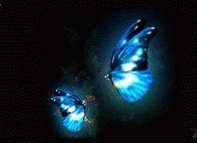 蝴蝶 愛情起源於蝴蝶