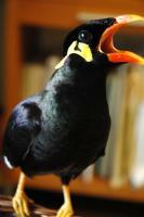 鳥的歌聲.jpg