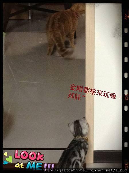 金剛 and 萌_20121013-01