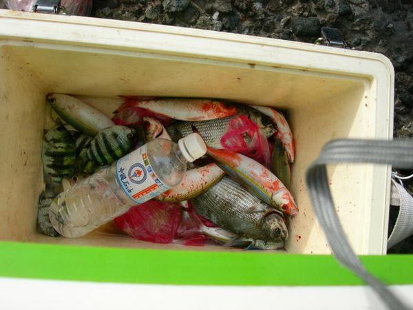 漁夫吊的..另外一箱很多