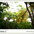 林場-28