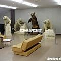 這裡的熊據說都是從北海道運過來的