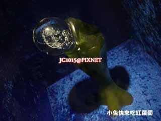 沒有種類的魚1975_1340372138-3321197823