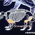 DSC09567股骨、肱骨