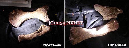 DSC09585(骨客)骨、尺骨、肱骨、股骨