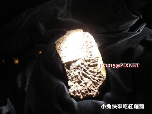 DSC09586骨板