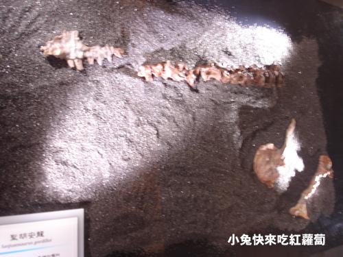 DSC09845頭骨部分骨骼、恥骨、肩胛骨、頸椎