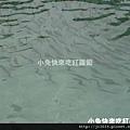 DSC05650_香魚.JPG