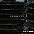 DSC05669_林內某戶茶農家.JPG