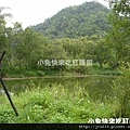 DSC05655_貢德氏赤蛙(狗蛙)_渡南橋人工溼地.JPG