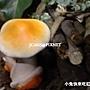 未來館_魔法菇菇