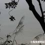 景物(12.10同事拍)