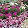 菊展的造景植物
