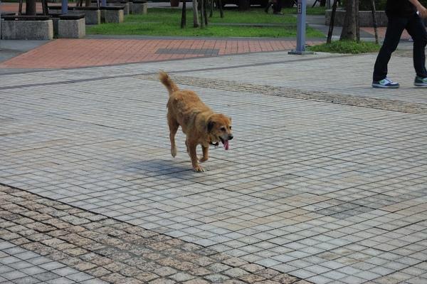 這隻狗兒原本走路一拐一拐,結果正要拍她就飛奔起來