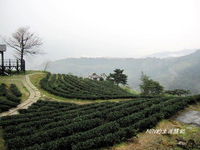 玉蘭茶園 (2).JPG