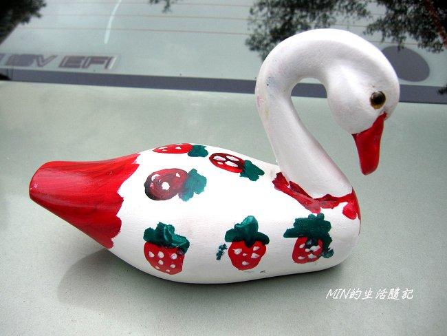 2011苗栗採果 (59).JPG