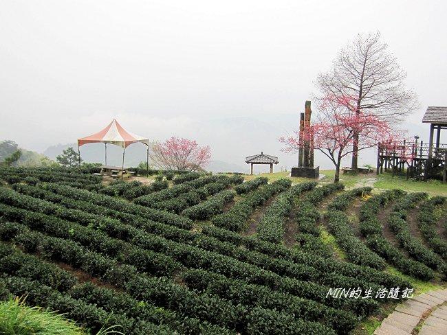 玉蘭茶園 (5).JPG