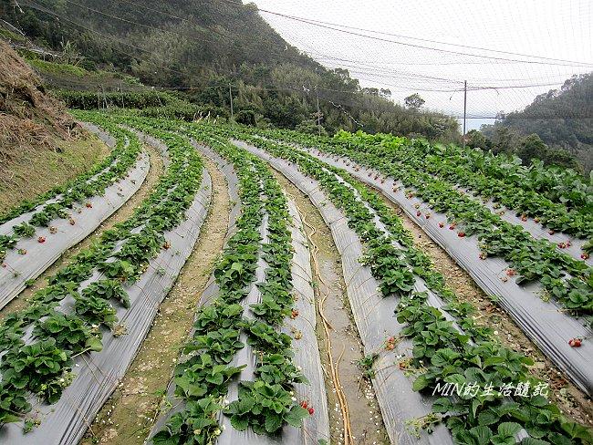 佳樂休閒農園 (6)