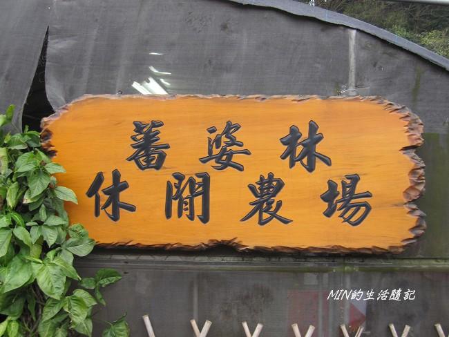 三芝櫻花 (14)