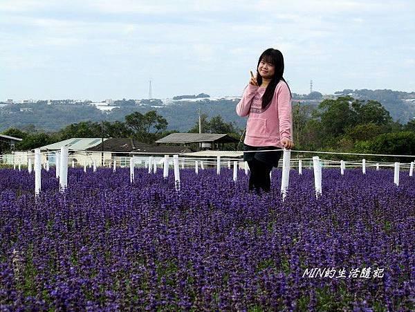 2013新社花海節 (43)