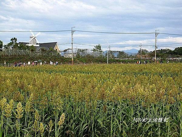 2013新社花海節 (63)