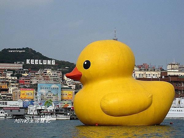 黃色小鴨 (10)