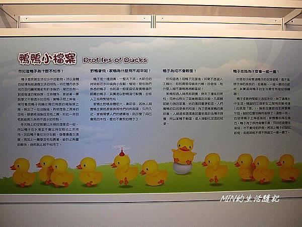 黃色小鴨 (40)