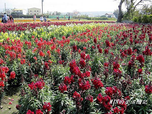 中社觀光花市(50)