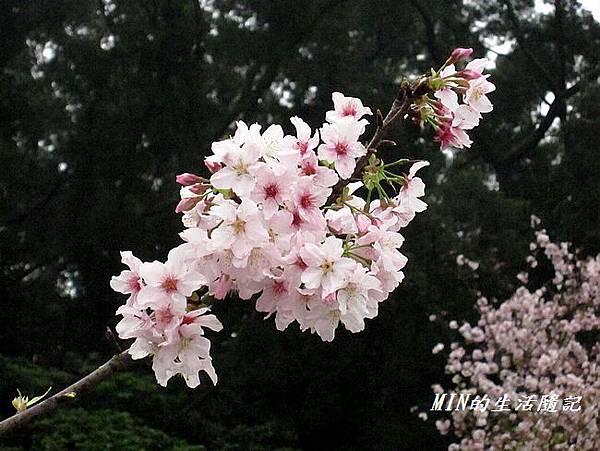 天元宮(9)