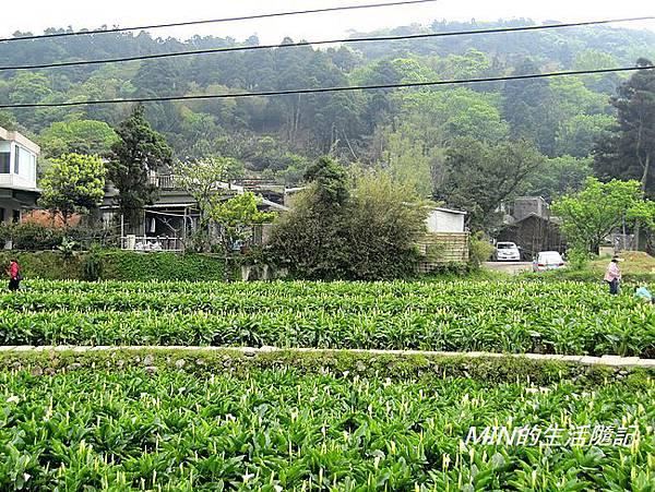 竹子湖(13)