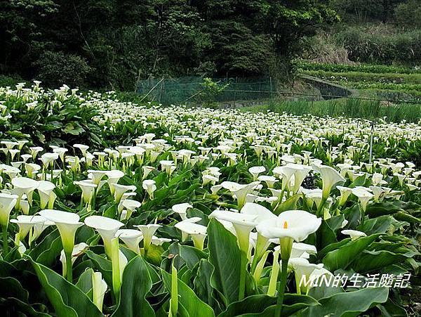 竹子湖(41)